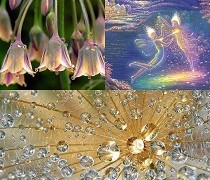 Devaer – de smukkeste engle i naturen