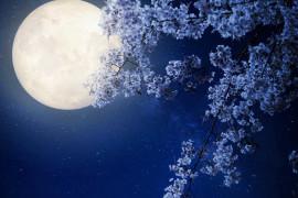 Fuldmåne healing med de lemuriske engle